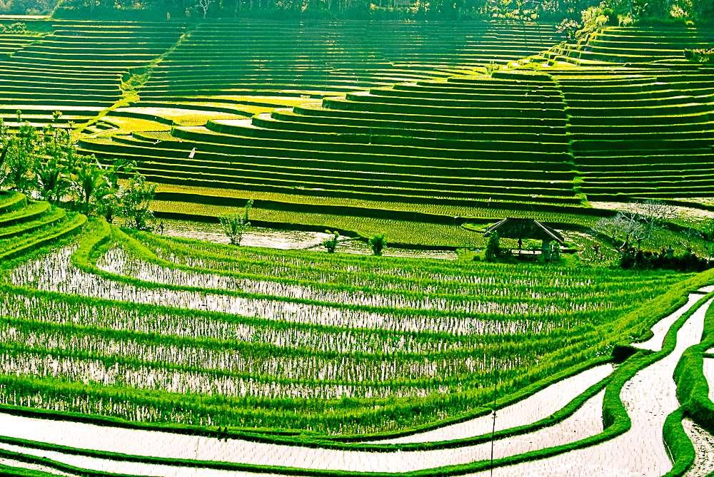 Bali, l'Isola Degli Dei