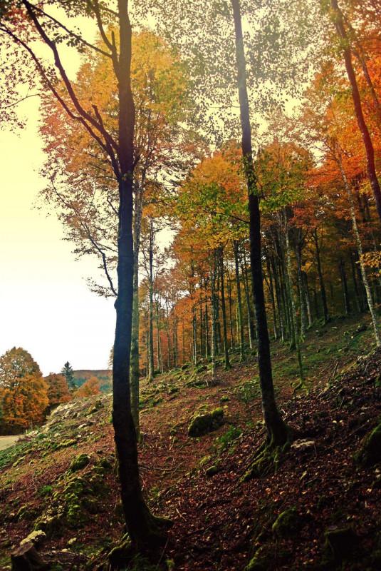Bosco del Cansiglio in Autunno