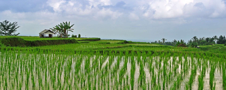 Bali_risaie_Jatiluwi